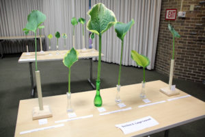 UNYHS Cut Leaf Show table with Section II Large Leaved