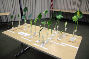UNYHS Cut Leaf Show table with Section IV Small Leaved